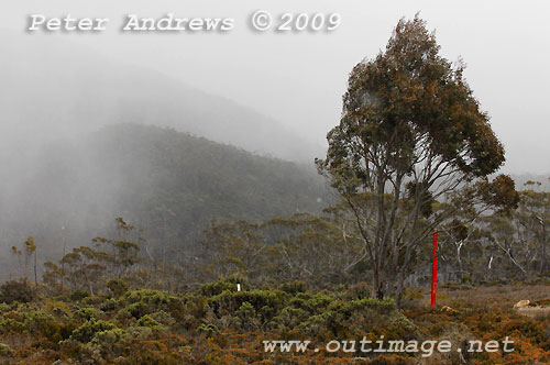 Snow falling at Wombat Moor with the Mawson Plateau hidden in the background, Mt Field National Park. Photo copyright Peter Andrews.