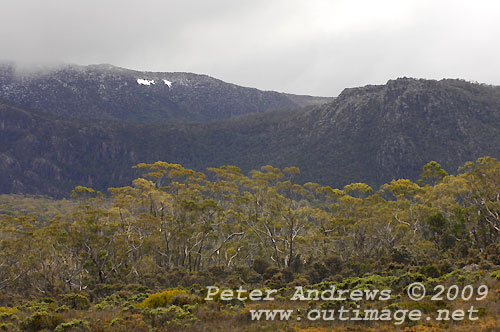 Mawson Plateau from Wombat Moor, Mt Field National Park. Photo copyright Peter Andrews.