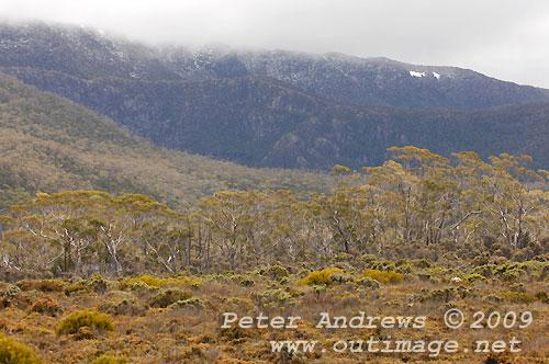 Pockets of snow on Mawson Plateau, seen from Wombat Moor, Mt Field National Park. Photo copyright Peter Andrews.