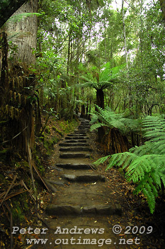 The bottom of track up from Russell Falls to Horseshoe Falls, Mt Field National Park. Photo copyright Peter Andrews.