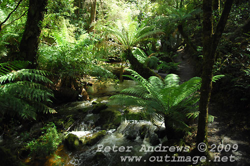 Downstream of Horseshoe Falls, Mt Field National Park. Photo copyright Peter Andrews.