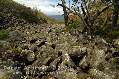 Rocky terrain surrounded by sub-alpine woodland, Mt Field National Park. Photo copyright Peter Andrews.
