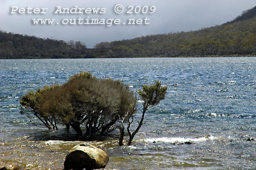 Lake Fenton, Mt Field National Park. Photo copyright Peter Andrews.