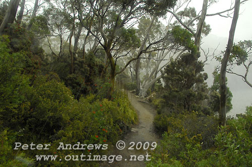 The Pandani Grove Nature Walking track beside Lake Dobson with snow falling in the distant background. Photo copyright Peter Andrews.