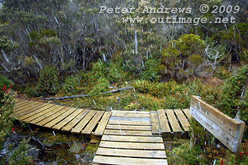 A mid-summer blizzard hits the sub-alpine area near Lake Dobson, Mt Field National Park. Photo copyright Peter Andrews.