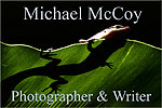 Michael McCoy's website index page banner reveals a small lizard sunning itself on top of a large green leaf, in a tropical rainforest setting. The photograph is taken from underneath, sunlight from above luminating the lizard and the top of the leaf. The lizard's head and two right feet hang over the edge of the leaf, while the rest of the lizards body is seen as a shadow cast through the green of the leaf contrasted with a black background. Click onto this banner to access an entry point to Michael's website located on his own server, remote from the outimage website.