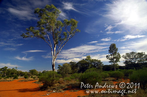 Taking a break from the Barrier Highway to take in the amazing colours of the Australian outback. At a roadside rest area between Cobar and Wilicannia, NSW Australia. Photo copyright Peter Andrews, Outimage Australia.