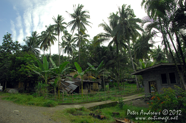 Houses along the highway to Kidapawan City, Cotabato Province, Mindanao, Philippines. Photo copyright Peter Andrews, Outimage Australia.
