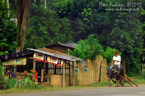 Buffalo traffic along the highway to Kidapawan City, Cotabato Province, Mindanao, Philippines. Photo copyright Peter Andrews, Outimage Australia.