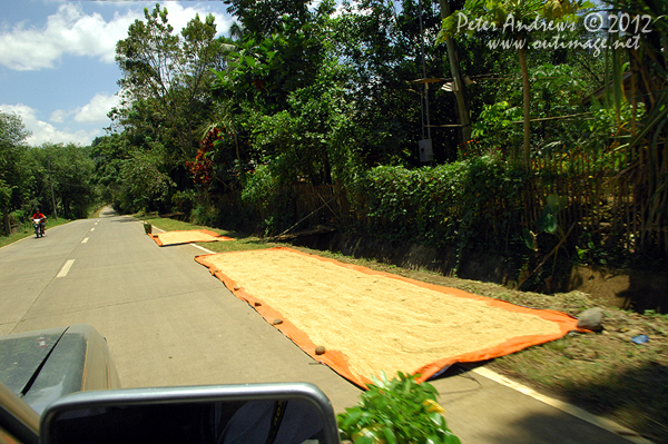Drying corn kernels on the President Roxas - Arakan Valley Road, Cotabato Province, Mindanao, Philippines. Photo copyright Peter Andrews, Outimage Australia.