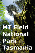 Mt Field National Park icon.